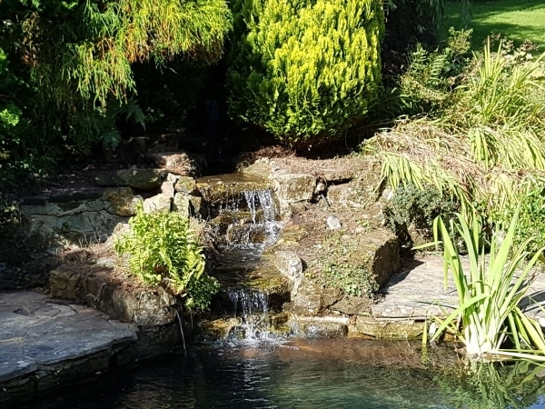 Example of our work - the pond guys