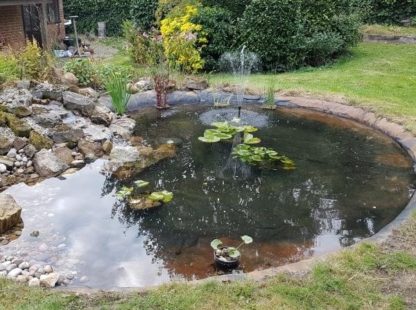 Pond after a maintenance visit